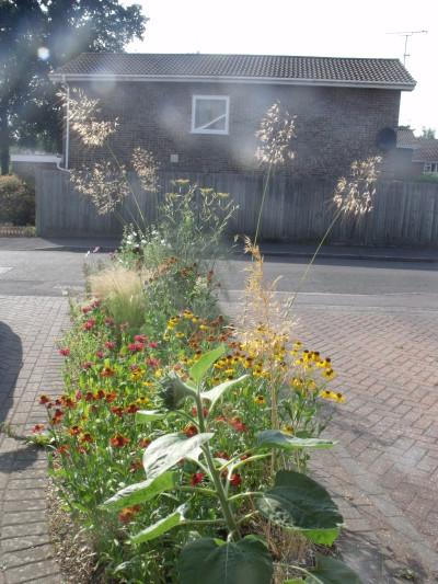 tiny front garden