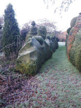 organic topiary snow