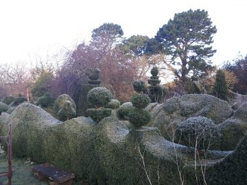 topiary cold