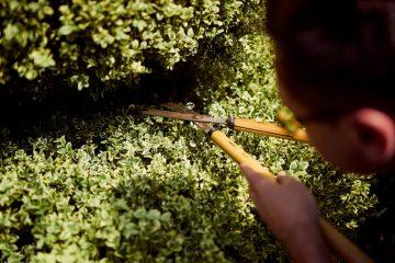 teaching topiary