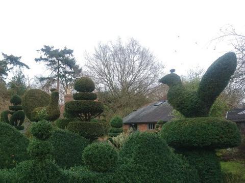 topiary transforming