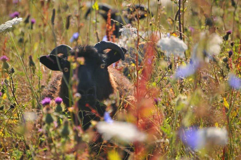 Wild Farming