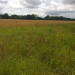 Essex Meadow 6