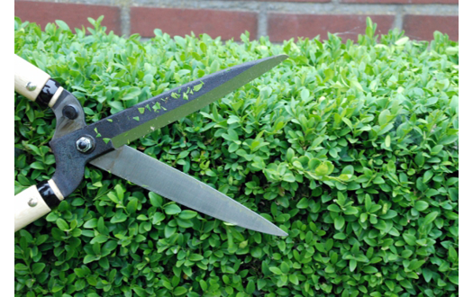 topiary design shears