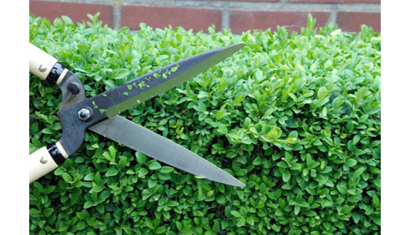 topiary design shears