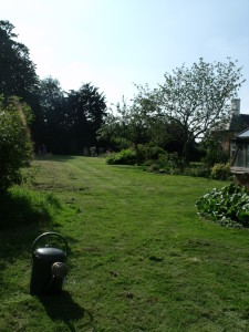 The Rough Lawn