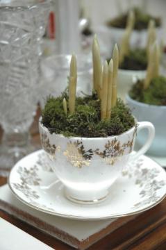 Pic 3 Teacup
