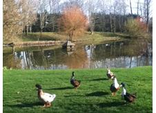 Pond Portfolio Image