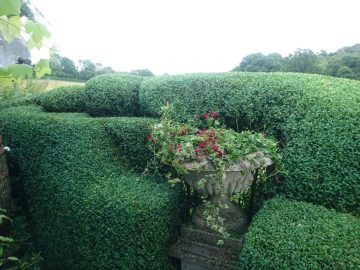 Topiary Maintain