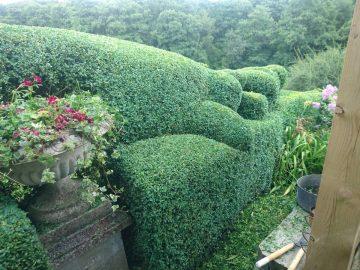 Topiary Make