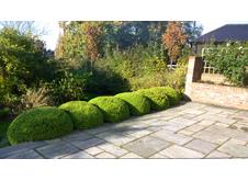 Topiary Portfolio Image1