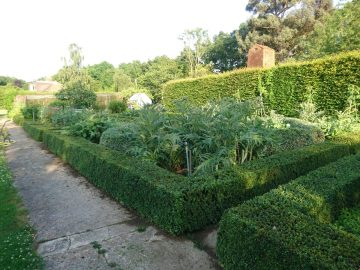 Topiary hedge maintenance