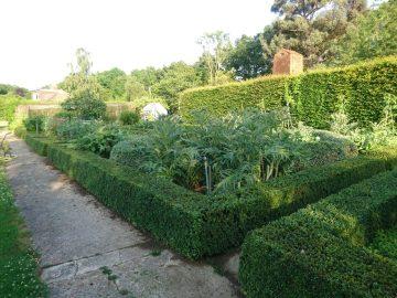 Topiary hedge maintenance