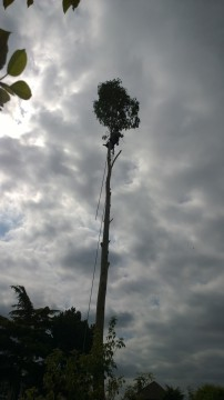 Tree Work 3