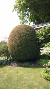 Yew Blob