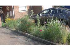 residential front garden