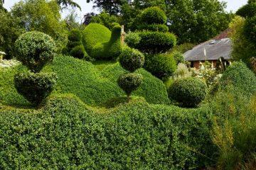 Topiary darren