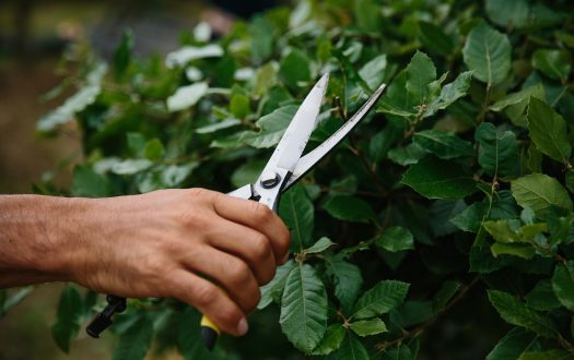 Best Topiary Clippers