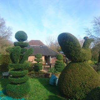 topiary from tools